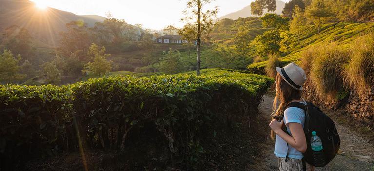 Munnar Coffee Plantations, Tea Plantations Munnar
